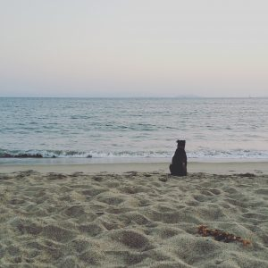 black dog sitting on the beach